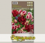 Тюльпан многоцветковый CLUB MIXED, 8 шт.