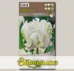 Тюльпан попугайный WHITE PARROT, 8 шт.