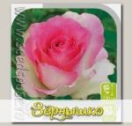 Роза чайно-гибридная МАЛИБУ, 1 шт.
