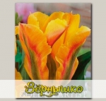 Тюльпан зеленоцветный GOLDEN ARTIST, 5 шт. NEW