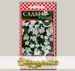 Бальзамин Акробат Белый, 5 шт.