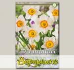 Нарцисс крупнокорончатый FLOWER RECORD, 5 шт. NEW