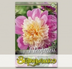 Георгин анемоновидный TAKE OFF, 1 шт.