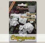 Пеларгония садовая Пинто Премиум Вайт F1, 5 шт. Platinum