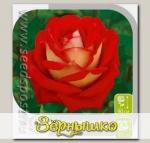 Роза чайно-гибридная ШАНТИ, 1 шт.