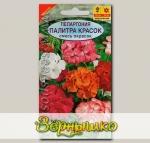 Пеларгония (герань) Палитра красок, Смесь, 10 шт.