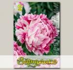 Пион травянистый CANDY STRIPE, 1 шт.