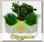 Гидропонный проращиватель семян и зёрен ЗДОРОВЬЯ КЛАД Х4 (4-х модульный)