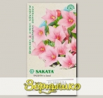 Платикодон крупноцветковый Звезда Розовая F1, 5 шт. Sakata