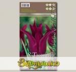 Тюльпан лилиецветный BURGUNDY, 8 шт.