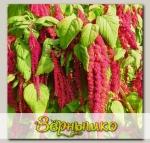 Амарант Овощной (семена для проращивания), 125 г