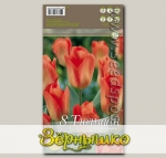 Тюльпан простой ранний ORANGE BRILLIANT, 8 шт.