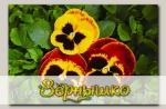 Виола крупноцветковая Колоссус Файр Сюрпрайз, 100 шт. Профессиональная упаковка