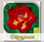 Роза чайно-гибридная ФРЕНДШИП, 1 шт.
