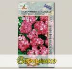 Пеларгония зональная Ринго 2000 Роуз Стар, 5 шт.