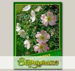 Роза Собачья, 0,5 г (? 35 шт.)