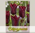 Тюльпан лилиецветный  LASTING LOVE, 7 шт. NEW