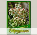 Сибирка Алтайская, 0,01 г (? 15 шт.)