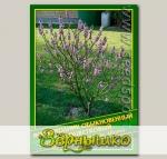 Волчеягодник Обыкновенный Белоцветковый, 0,1 г (? 2 шт.)