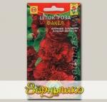 Шток-роза Факел, 12 шт.