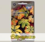 Тыква декоративная Фанго, 1 г