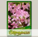 Рододендрон Шлиппенбаха Ф. Розовая, 0,02 г (? 50 шт.)