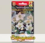 Морозник Рождественская роза, 5 шт.