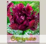 Тюльпан попугайный NEGRITA PARROT, 8 шт.