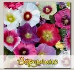 Шток-роза Хало Микс, 250 шт. Профессиональная упаковка