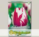 Тюльпан бахромчатый FLAMING BALTIC, 8 шт. NEW