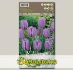 Тюльпан Триумф ALIBI, 8 шт.
