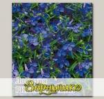 Лобелия Ривьера Синяя, 250 шт. Профессиональная упаковка