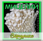 Мицелий зерновой Энокитаке, 150 мл