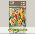 Тюльпан Дарвина OLYMPIC FLAME, 8 шт.