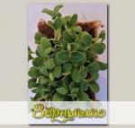 Набор для выращивания микрозелени Бораго Владыкинское Семко
