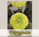 Цинния Гиганты Бенари Лайм, 100 шт. Профессиональная упаковка