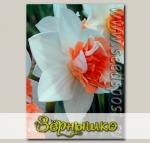 Нарцисс махровый CANDY PRINCESS, 5 шт.