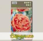Тюльпан бахромчатый SENSUAL TOUCH, 8 шт.