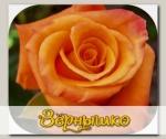 Роза чайно-гибридная ВУДУ, 1 шт. NEW