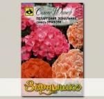 Пеларгония зональная Уникум, Смесь, 6 шт.