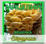 Мицелий зерновой Вешенка Лимонная, 150 мл