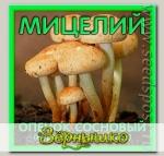 Мицелий зерновой Опенок Сосновый, 150 мл