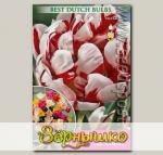 Тюльпан махровый поздний CARNAVAL DE NICE, 5 шт.