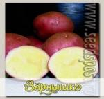 Севок картофеля Дева, 500 г