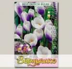Крокус ботанический PRINS CLAUS, 10 шт.