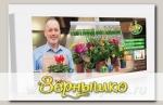 Фитосветильник (фитолампа) растущий ЗДОРОВЬЯ КЛАД, 16 Вт