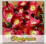 Шток-роза Хало Ред, 100 шт. Профессиональная упаковка