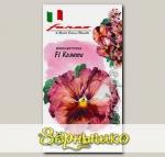 Виола Виттрока Кьянти, 5 шт. Farao Итальянские сорта и гибриды