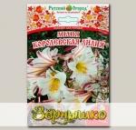 Лилия трубчатая КОРОЛЕВСКАЯ ЛИЛИЯ, 1 шт