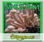 Мицелий зерновой Опенок Северный, 150 мл